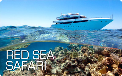 Red Sea Safari